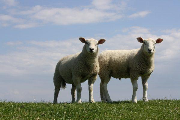 O zagubionej owcy, złym najemniku, św. Józefie Kalasancjuszu i pustoszejących seminariach…